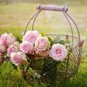amour - roses - Dominique VA - DVA Création